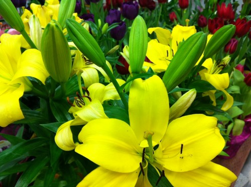 Yellow Lilies, Apache Blessing mamawolfe