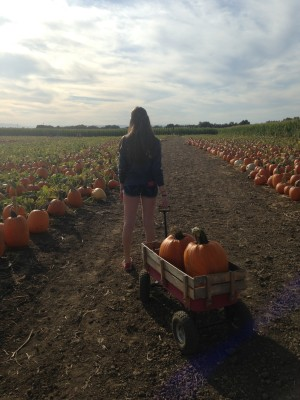 Lily pumpkin patch