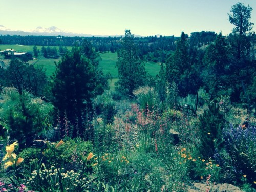 morning meadow view near Bend, Oregon